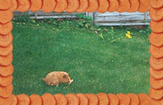 Guinea-Pig.jpg@3318