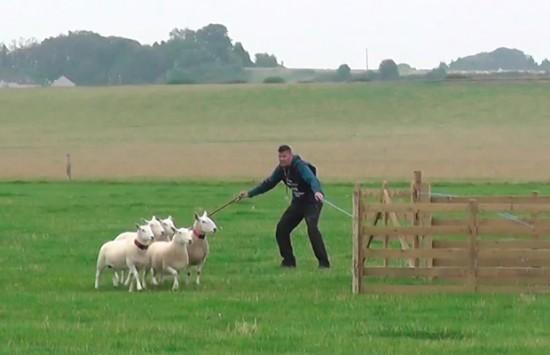 Sheep-WShand.jpg@2804