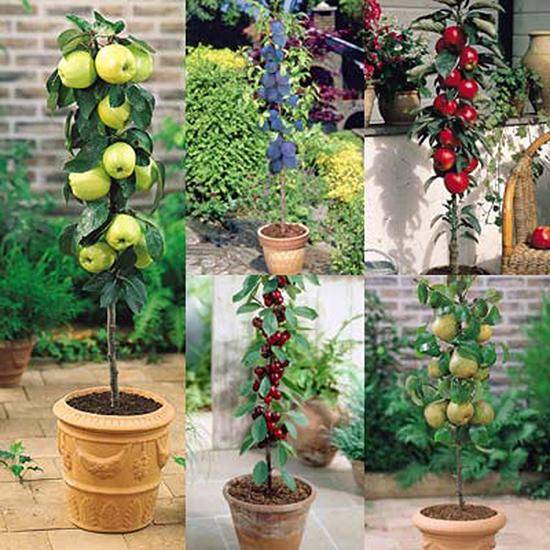 m_fruit