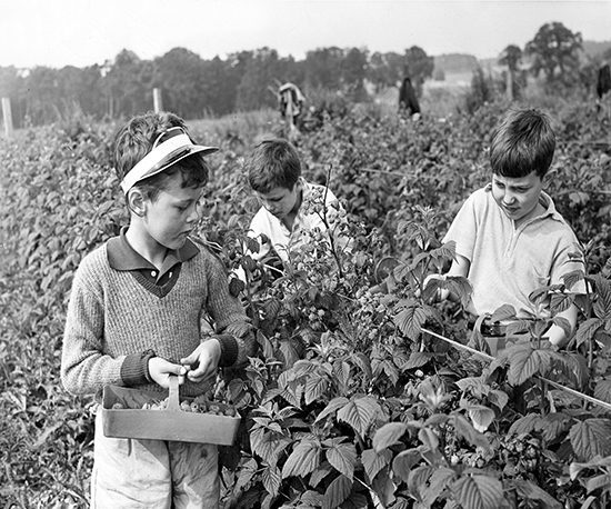 E28 Berry Picking 1963-08-00 00_09 (C)DCT