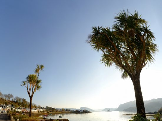 Plockton Palms