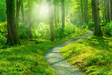 Sunny Forest Path, step bravely