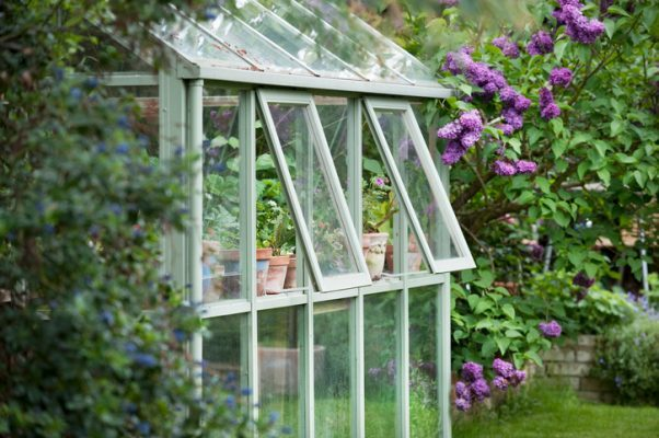 Greenhouse in back garden with open windows for ventilation. Autumn checklist