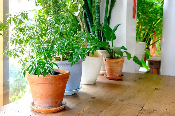 September garden tip Plant pot displayed in the window. houseplants