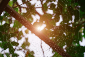 Spider web with water drops in the sunlight on a background of green leaves. Even in a cobweb, you'll find a work of art.