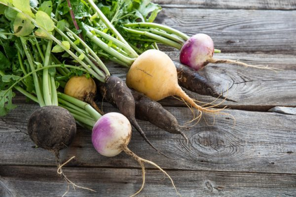 bunch of colorful organic imperfect black radishes and turnips with fresh green tops and roots on old wood background for authentic gardening, studio shot. Fruit and veg
