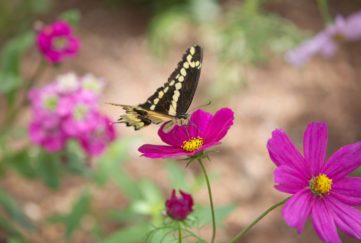 Butterfly on bright flowers. beauty of life moments