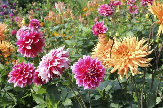 sea of flowers in the summer. September garden checklist