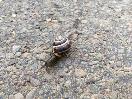What's the link between a snail and Judy Murray?