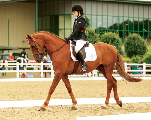 """Grace, competing on Rozzell Iceman of Mullentine (""""Stevie"""" to his friends)."""
