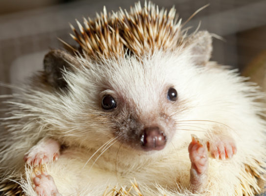 Dawn Lawrence Helps A Hedgehog! - The People's Friend